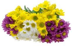 Ramo de crisantemo Imagen de archivo libre de regalías