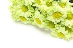 Ramo de crisantemo en un fondo blanco Fotos de archivo