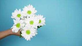 Ramo de crisantemos blancos a disposición, visión superior Pare el movimiento almacen de metraje de vídeo