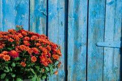 Ramo de crisantemos enormes en un contexto Foto de archivo libre de regalías