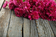 Ramo de crisantemos púrpuras hermosos en fondo de madera Fotografía de archivo