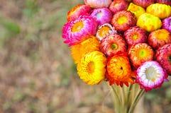 Ramo de flor Fotos de archivo libres de regalías
