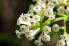 Ramo de flor blanca imagenes de archivo