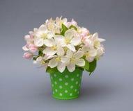Ramo de flor de la manzana en el cubo Primavera boda tarjeta Imagen de archivo libre de regalías