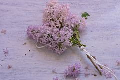 Ramo de flor púrpura de la lila aislada en la primavera de madera ligera de la recepción de la decoración de la primavera del fon Foto de archivo libre de regalías