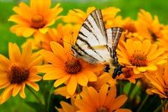 Ramo de flores amarillas Eyed negras de Susan foto de archivo