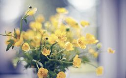 Ramo de flores amarillas de ranúnculos en una ventana Fotos de archivo libres de regalías