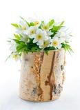 Ramo de flores blancas de la primavera Fotos de archivo libres de regalías