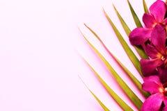 Ramo de flores bonitas da orquídea com folhas de palmeira no fundo cor-de-rosa imagem de stock