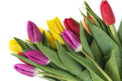 Ramo de flores coloreadas multi hermosas de los tulipanes Fotografía de archivo libre de regalías