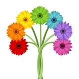 Ramo de flores coloridas del gerbera. Fotografía de archivo