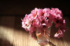 Ramo de flores de cereza imágenes de archivo libres de regalías