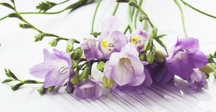 Ramo de flores de las fresias Imagen de archivo