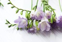 Ramo de flores de las fresias Imagenes de archivo