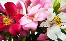Ramo de flores del Alstroemeria fotografía de archivo