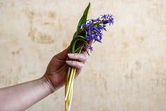 Ramo de flores del bosque en mano femenina imagenes de archivo