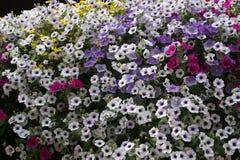 Ramo de flores del colorfoul Imagen de archivo libre de regalías