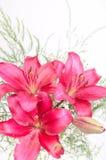 Ramo de flores del lirio fotografía de archivo libre de regalías