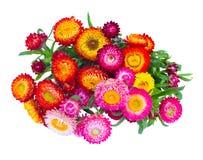 Ramo de flores eternas imagenes de archivo