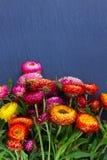 Ramo de flores eternas imágenes de archivo libres de regalías