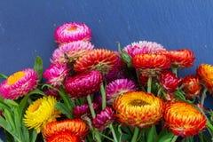 Ramo de flores eternas fotografía de archivo libre de regalías
