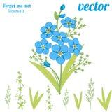 Ramo de flores hermosas de la nomeolvides ilustración del vector