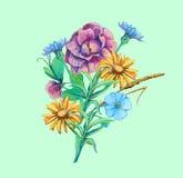 Ramo de flores manzanilla, cichorium, olvidar-yo Imágenes de archivo libres de regalías