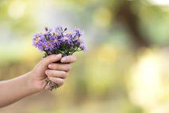 Ramo de flores púrpuras en la mano de la mujer Fotos de archivo