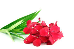 Ramo de flores rojas. Imagen de archivo