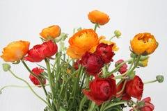 Ramo de flores rojas y anaranjadas contra blanco Fotografía de archivo