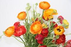 Ramo de flores rojas y anaranjadas contra blanco Fotos de archivo