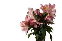 Ramo de flores rosadas del Alstroemeria Imagen de archivo libre de regalías