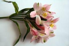 Ramo de flores rosadas del Alstroemeria Fotografía de archivo