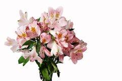 Ramo de flores rosadas del Alstroemeria Imágenes de archivo libres de regalías