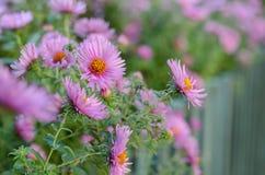 Ramo de flores rosadas del jardín Fotos de archivo libres de regalías