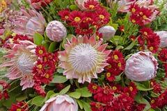 Ramo de flores rosadas y rojas como fondo Fotos de archivo