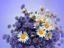 Ramo de flores salvajes Fotos de archivo