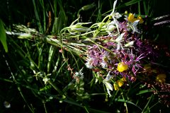 Ramo de flores salvajes Fotos de archivo libres de regalías