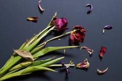 Ramo de flores secadas en un fondo negro Foto de archivo