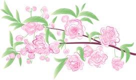 Ramo de florescência ilustração stock