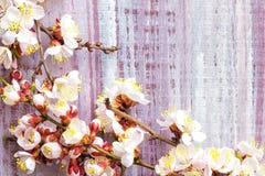 Ramo de florescência Imagem de Stock Royalty Free