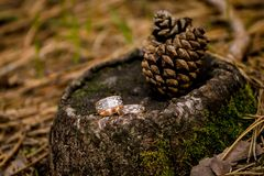 Ramo de florescência com as flores delicadas brancas na superfície de madeira Declaração do amor, mola Cartão de casamento, Valen imagem de stock
