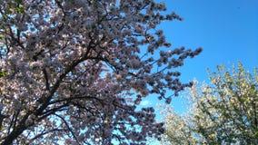 Ramo de florescência da árvore imagem de stock