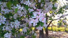 Ramo de florescência da árvore imagem de stock royalty free