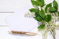 Ramo de florescência da cereja de pássaro em um fundo de madeira branco Imagem de Stock Royalty Free