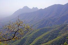Ramo de florescência nas montanhas. Fotos de Stock Royalty Free