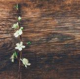 Ramo de florescência no fundo de madeira do grunge velho Imagem de Stock