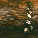Ramo de florescência no fundo de madeira velho do grunge Fotografia de Stock