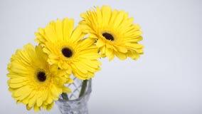 Ramo de gerberas amarillos Foto de archivo libre de regalías