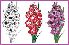 Ramo de gladiolo de las flores Imagen de archivo libre de regalías